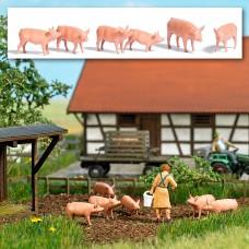 1172 - Hog Set 6/