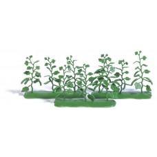 1238 - Cucumber Plants 9/