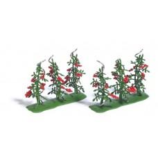 1239 - Tomato Plants 6/