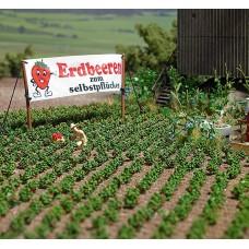 1265 - Strawberry Plants 40/