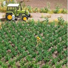 1266 - Potato Plants 30/