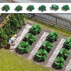 1268 - Rhubarb Plants 6/
