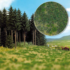 1308 - Grndcvr Edge Forest Grass