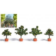 6619 - Citrus Trees 4/