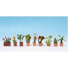 Noch  14062 - Ornamental Plants #2 9/