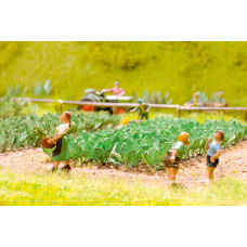 Noch  14110 - Turnips 30/