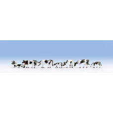 Noch  15721 - Black-white Cows 7/