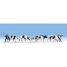 Noch  15724 - Drover & Cows 7/