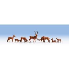 Noch  15730 - Deer 7/