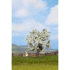Noch  21580 - Cherry tree 3