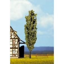 Noch  21680 - Poplar Tree 4-3/4