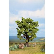 Noch  21760 - Oak Tree 6-1/4