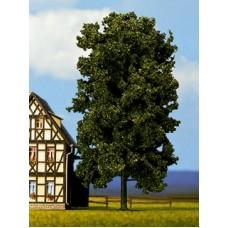 Noch  21800 - Chestnut tree 7 3/4