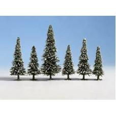 Noch  26428 - 10 Snow Fir Trees