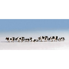 Noch  45721 - Cows Black/white 7/