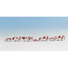 Noch  45723 - Cows brown & white 7/