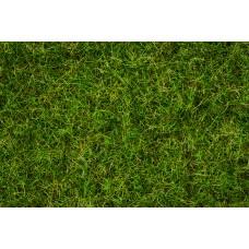 Noch  7076 - Grass Blend Smr Mdw 100g